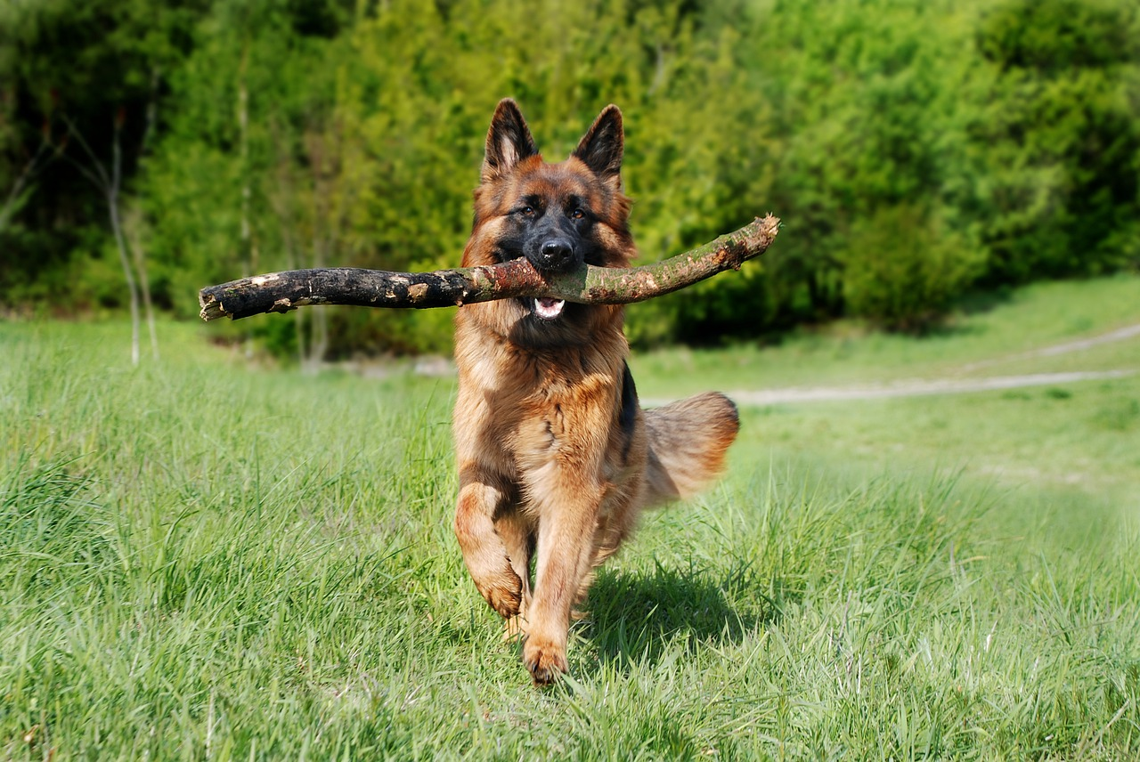 the Best 10 Dog Handling Service